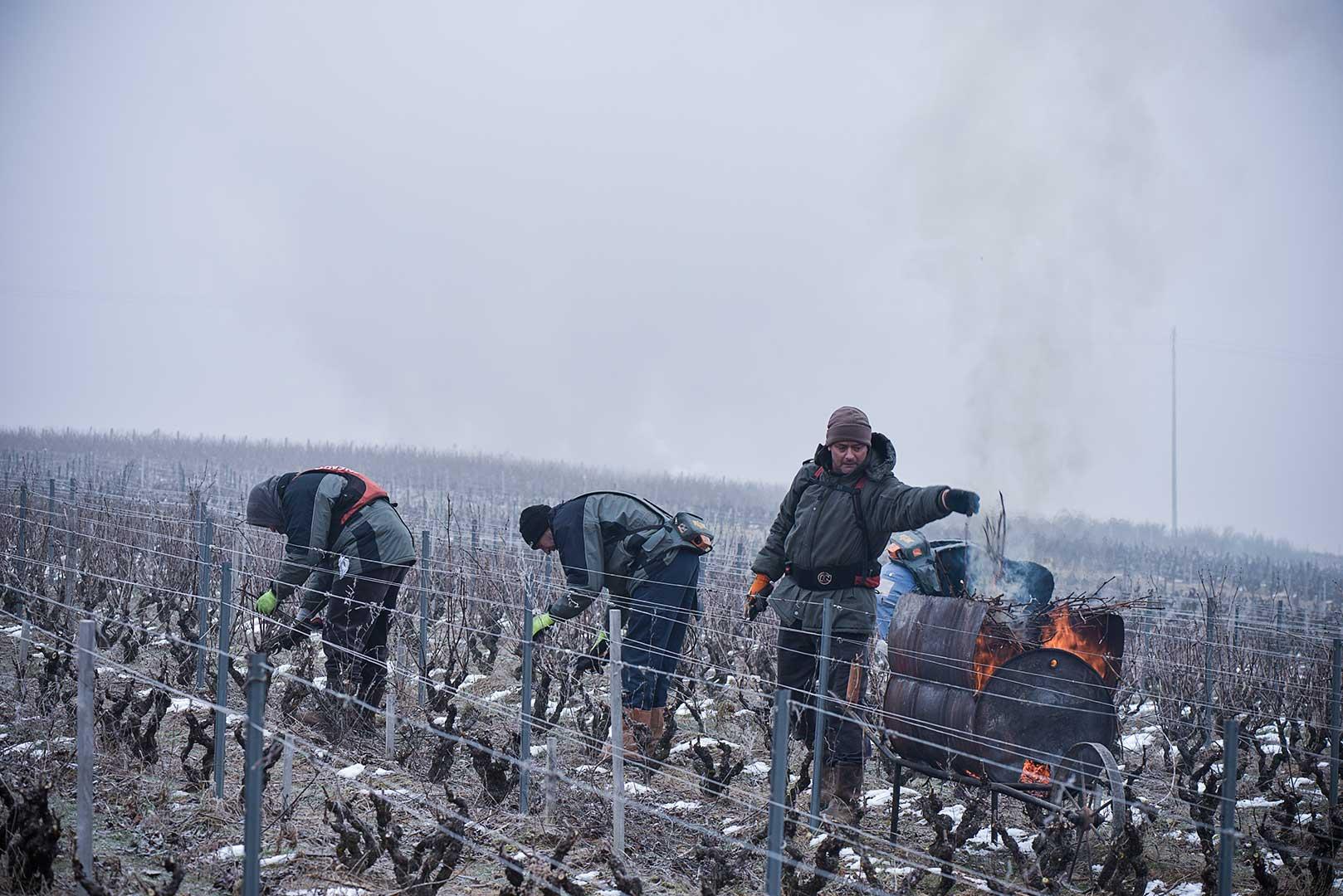 Beaujolais, hiver, brouillard, taille de la vigne, brulage des sarments, photo Emmanuel Perrin