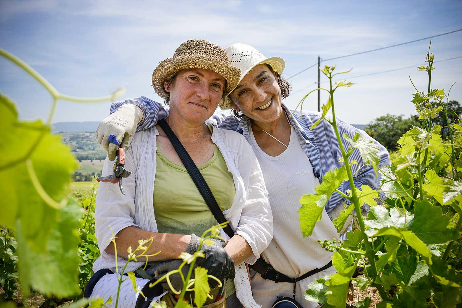 travail de la vigne, vendage en vert, égrappage, Vinsobres, photo Emmanuel Perrin