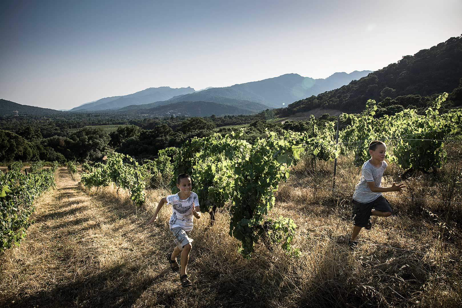 enfants qui courent dans les vignes, Corse, photo Emmanuel Perrin