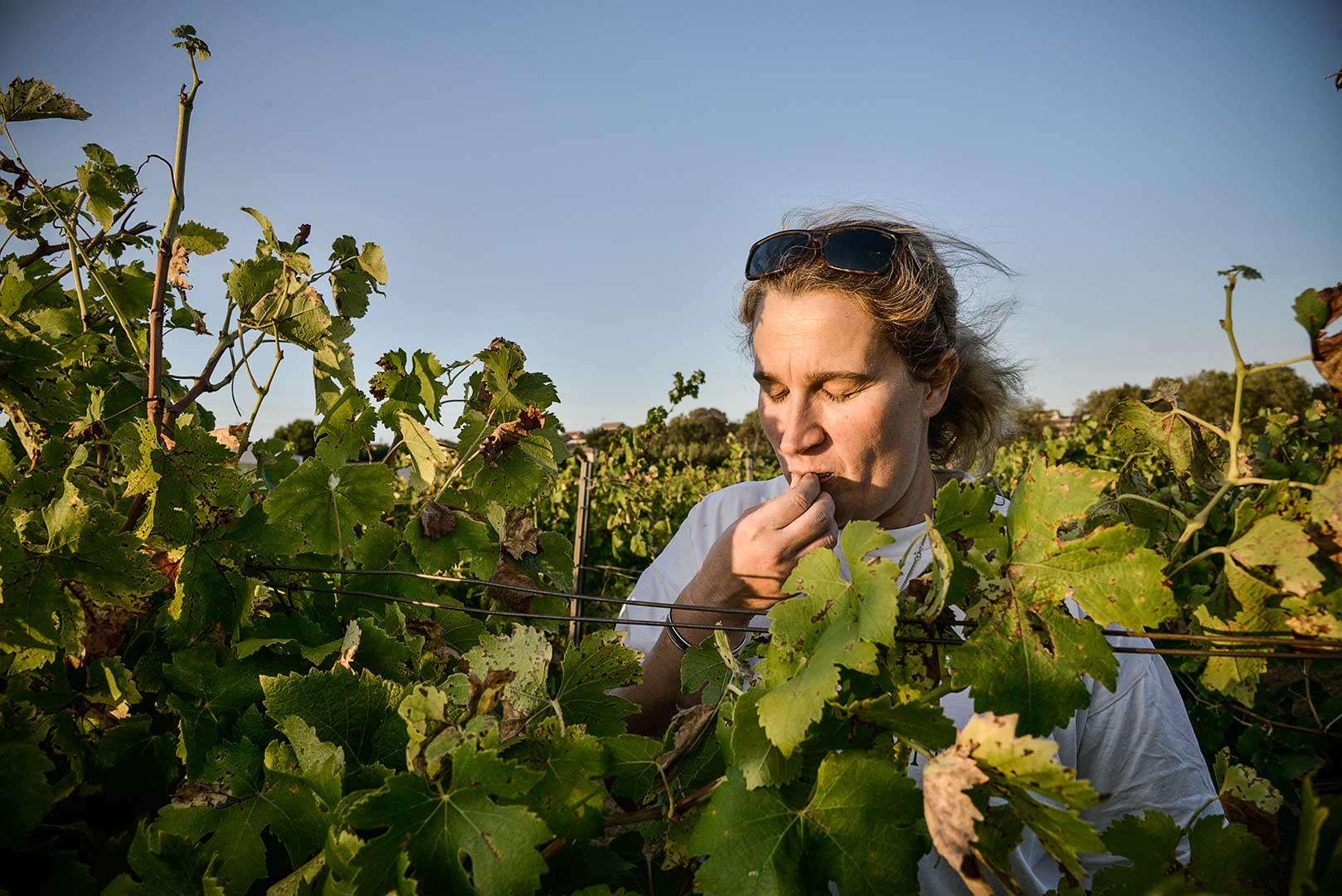 vigneronne, raisin, dégustation, photo Emmanuel Perrin