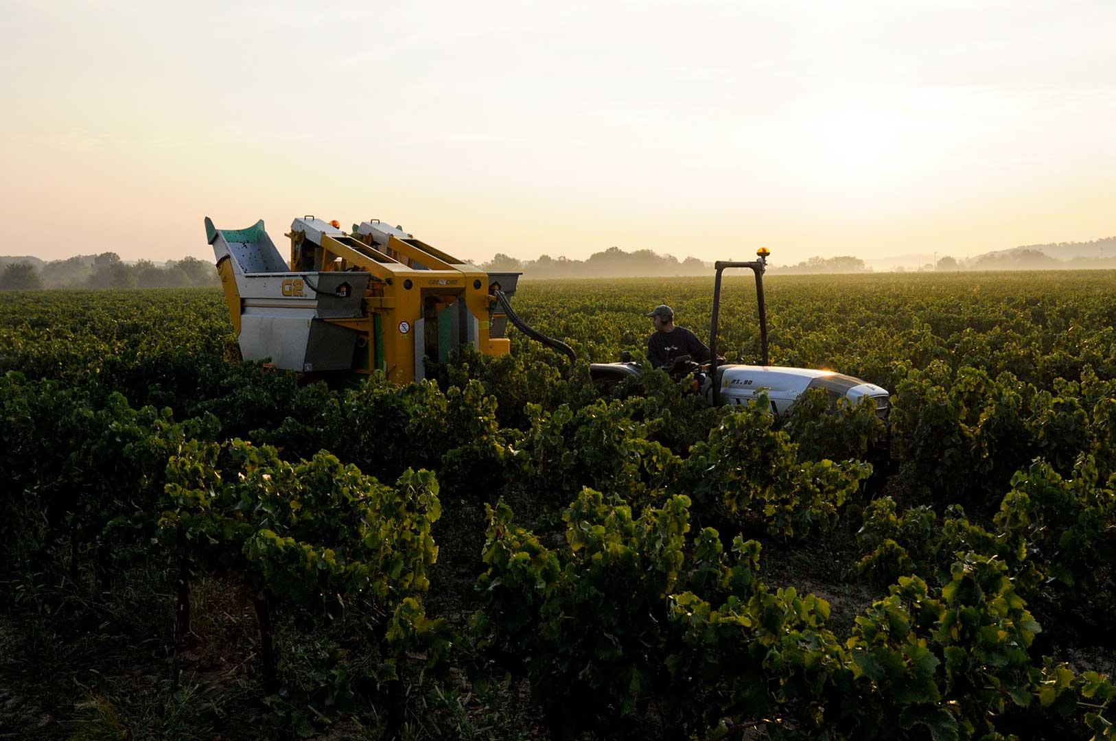 Lever du jour, vendanges mécanique, coopérative viticole, Gard, photo Emmanuel Perrin