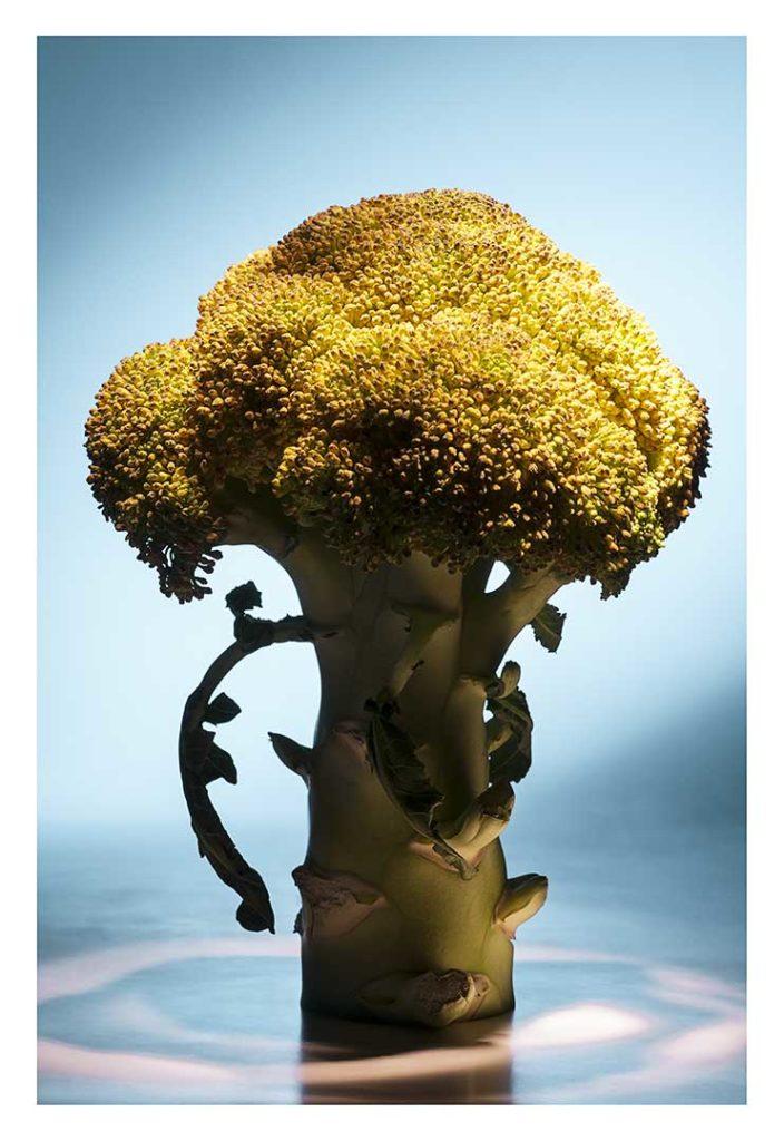 brocoli, bio, photo Emmanuel Perrin