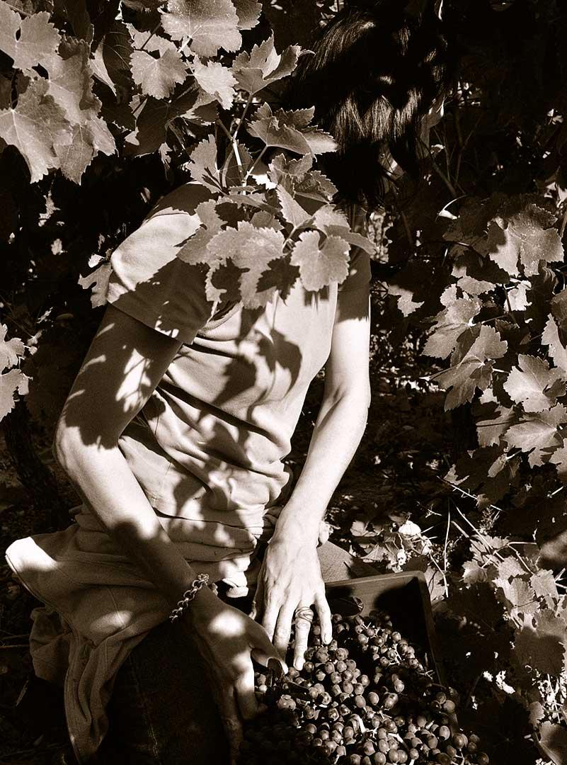 vendanges manuelles, vigneronnes, photo Emmanuel Perrin