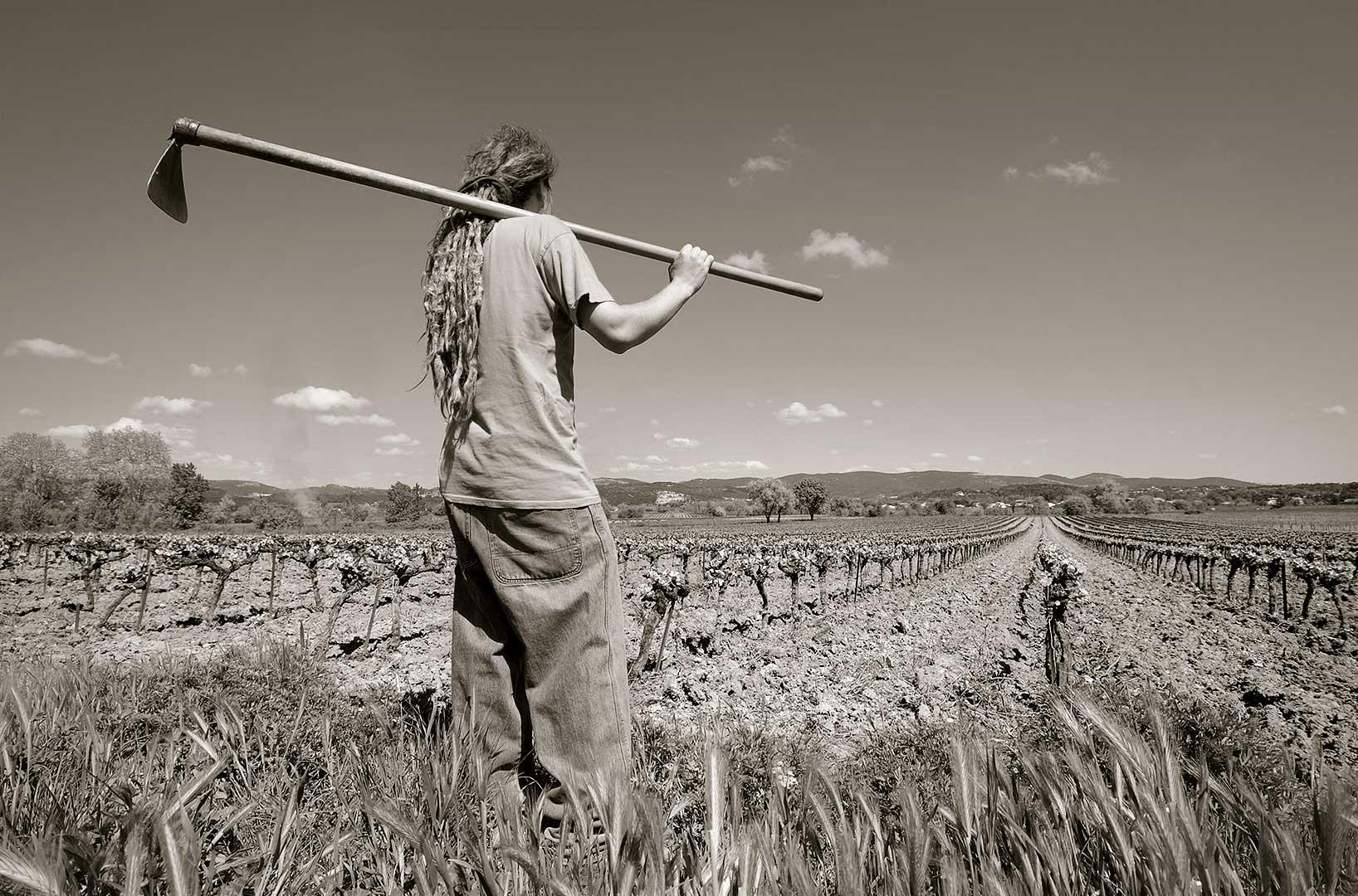 vignes en culture biologique, Gard, photo Emmanuel Perrin