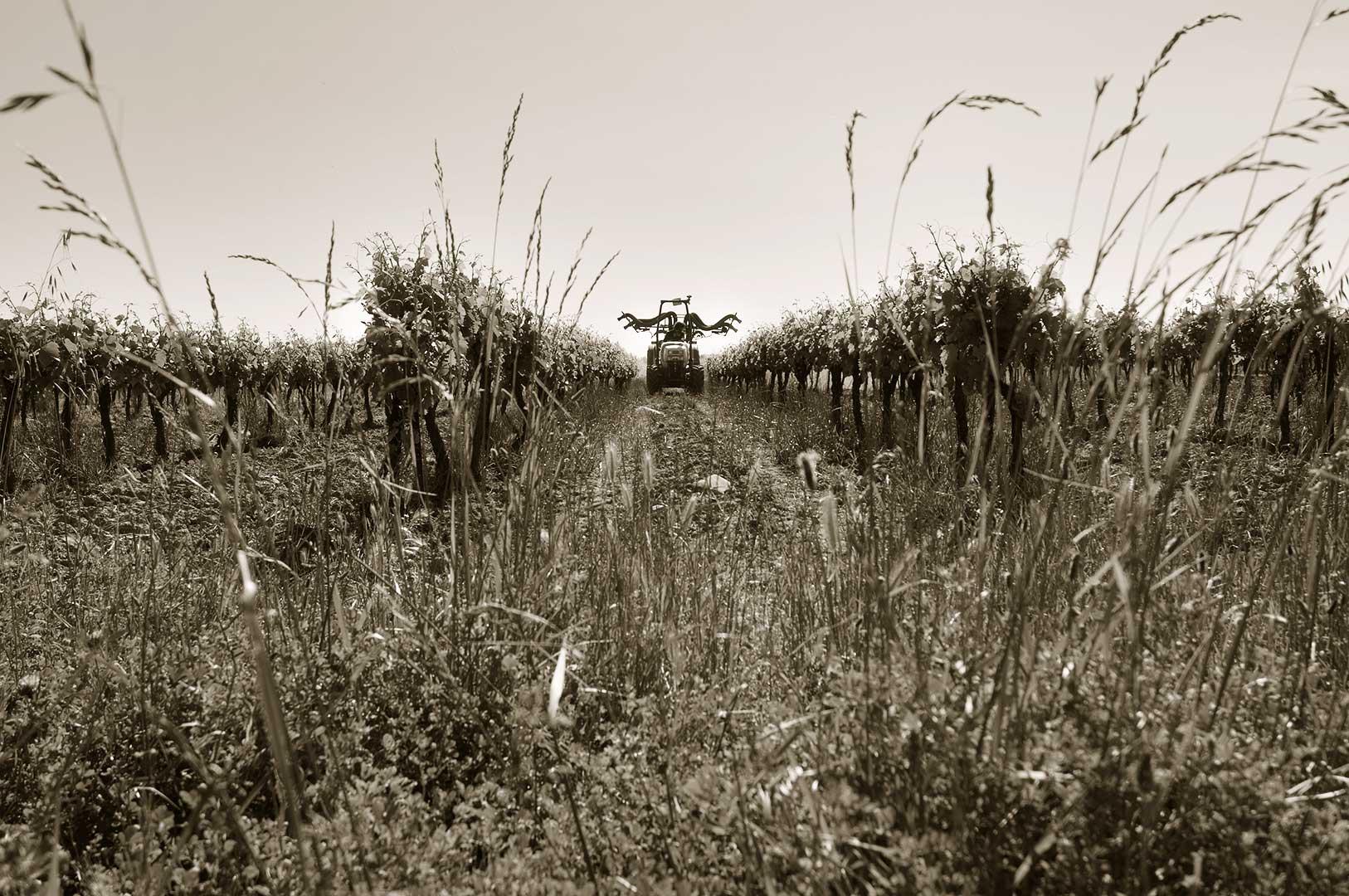 Vignoble, culture biologique, traitements, souffre, photo Emmanuel Perrin