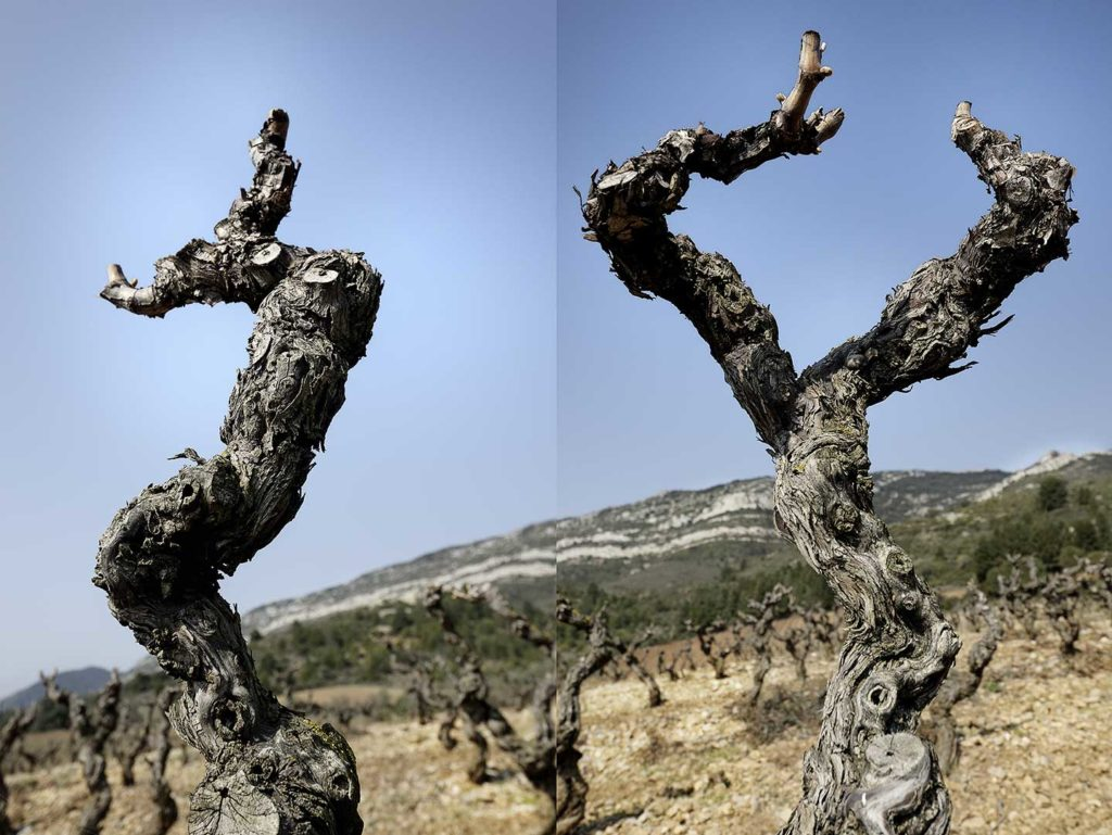 Corbières, cep, vigne, photo Emmanuel Perrin